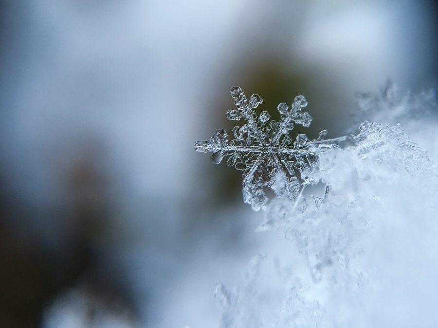 O Joy! O Rapture!: A Snow Day Miracle
