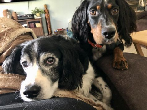 Two of Mrs. Emmersons dogs